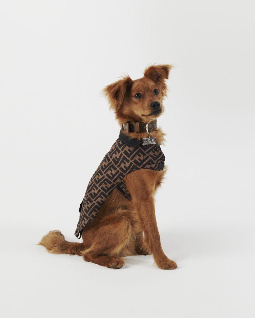 ナイロン素材で仕立てた犬用のコ