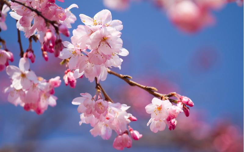 (2)お花見いこうよ